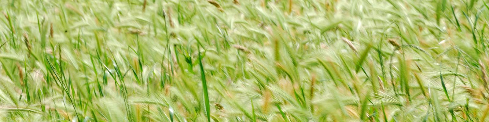 Pasta Garofalo - Engagement environnemental